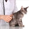 Ветеринарные клиники в Иваньковском